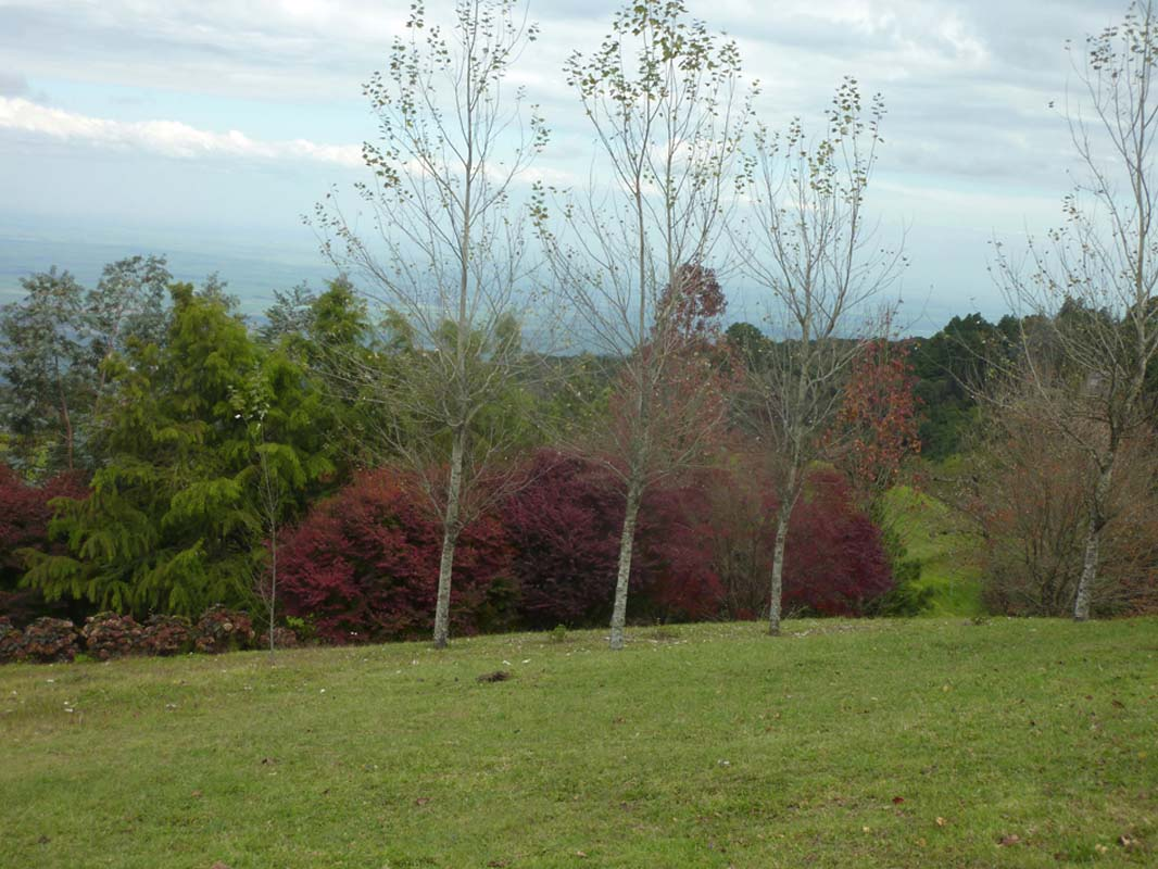 Cerro San Javier (7)